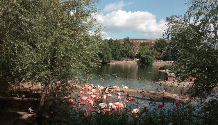 moskovskiy_zoopark_flamingo