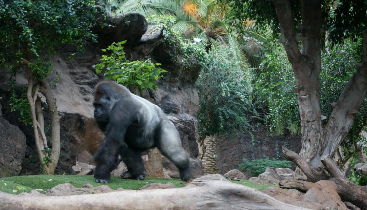 лучший зоопарк в Европе