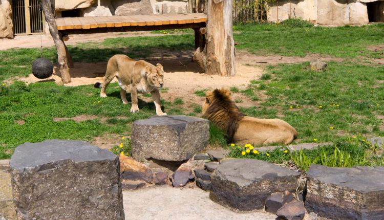 prazhskiy_zoopark