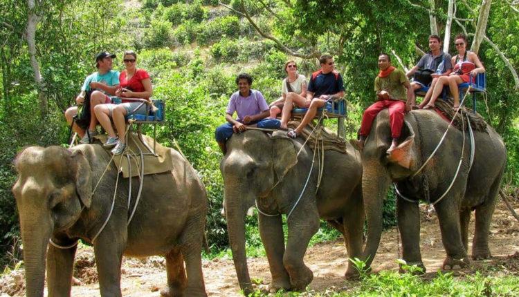 elephant-safari-tour
